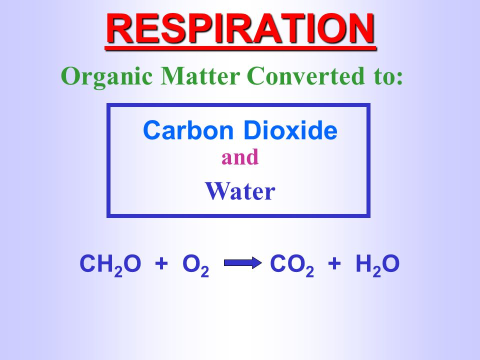 RESPIRATION Organic Matter Converted to: Carbon Dioxide Water and
