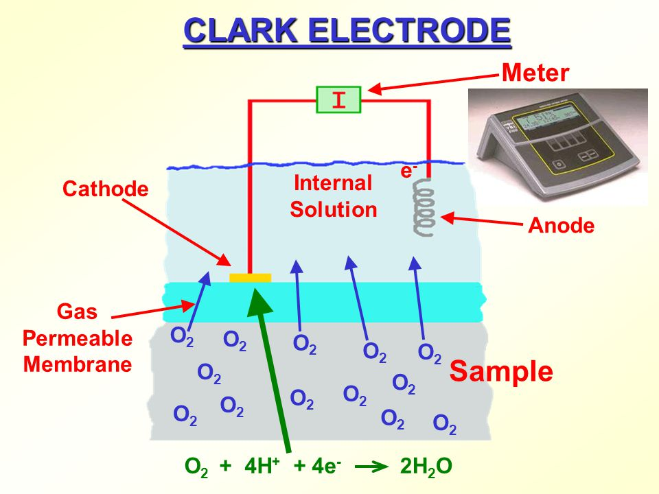 CLARK ELECTRODE Sample Meter e- Internal Solution Cathode Anode Gas