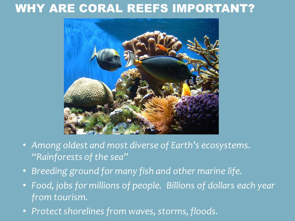 the importance of acroporal corals to the ocean environment Cell membrane ap biology a comprehensive list of the essential cell biology photosynthesis.