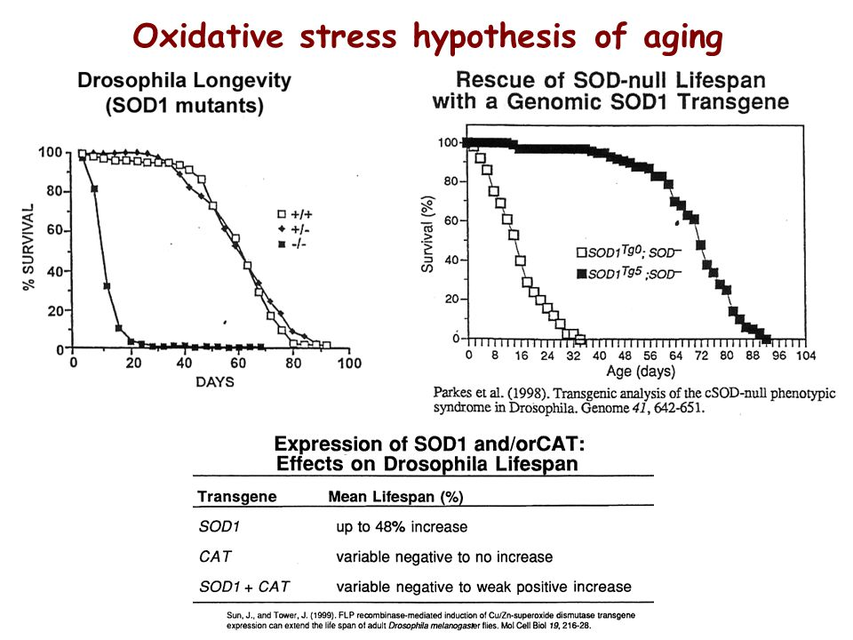 effect of oxygen and oxidative stress on ageing Oxidative stress by inorganic nanoparticles  the effect of primary particle size on  holbrook, nj oxidants, oxidative stress and the biology of ageing.