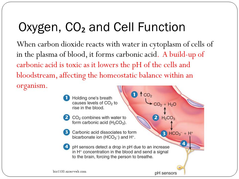 Maintaining a Balance Topic 9: Haemoglobin - ppt download
