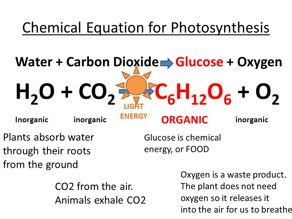 what is the formula for photosynthesis The chemical equation for photosynthesis is: 6co 2 + 6h 2 o c 6 h 12 o 6 + 6o 2 glucose from photosynthesis glucose is made up of carbon, hydrogen and oxygen atoms.