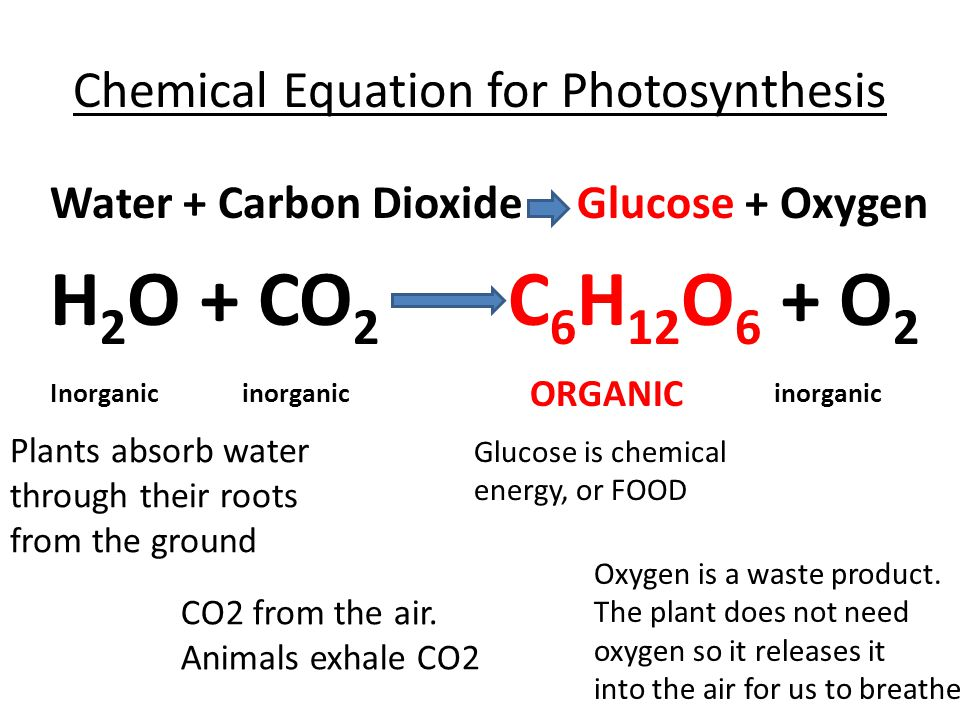 chemical equation for chemosynthesis What is the equation for photosynthesis in words (similar to chemosynthesis) a balanced chemical equation for the process can be written as 6co2.
