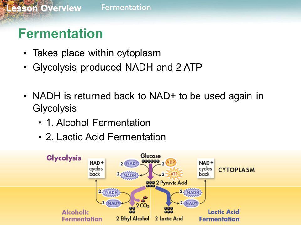 Lesson Overview 9.3 Fermentation. - ppt download