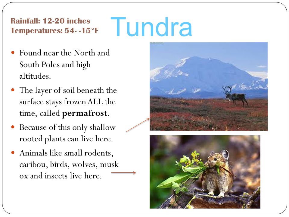 Tundra Found near the North and South Poles and high altitudes.