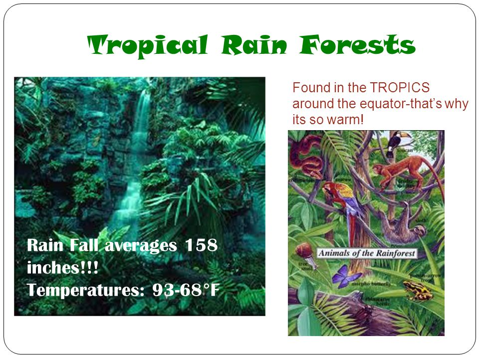 Tropical Rain Forests Rain Fall averages 158 inches!!!