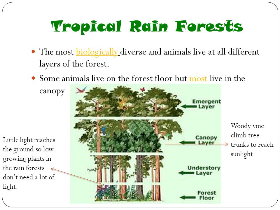Tropical Rain Forests The most biologically diverse and animals live at all different layers of the forest.