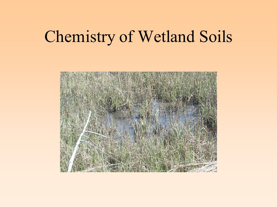 Isolated Versus Natural Organic Matter