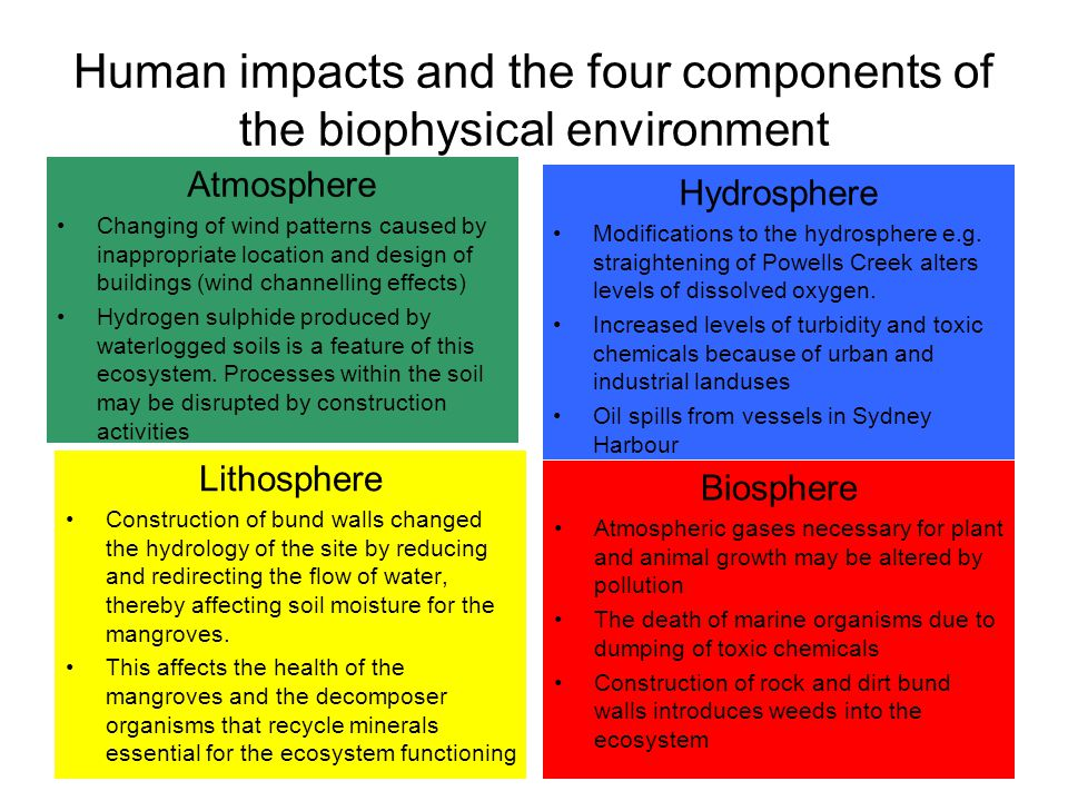 Human Impacts On The Intertidal Wetlands Of Homebush Bay