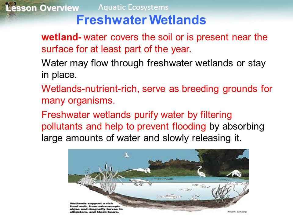 4 5 aquatic ecosystems worksheet