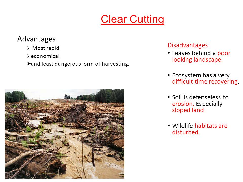disadvantages of cutting trees One of the advantages of deforestation is its being a source of income for farmers  who cut down trees to be made into coal and be sold as fuel moreover, trees.