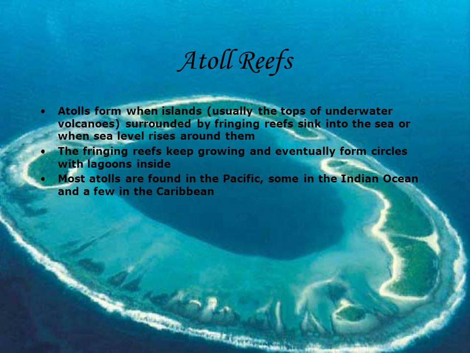 Coral Reefs By: Alica Majercinova Geography ppt download