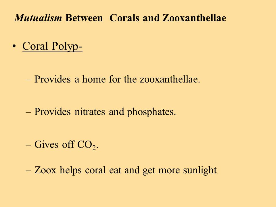 relationship between zooxanthellae coral polyps on rocks