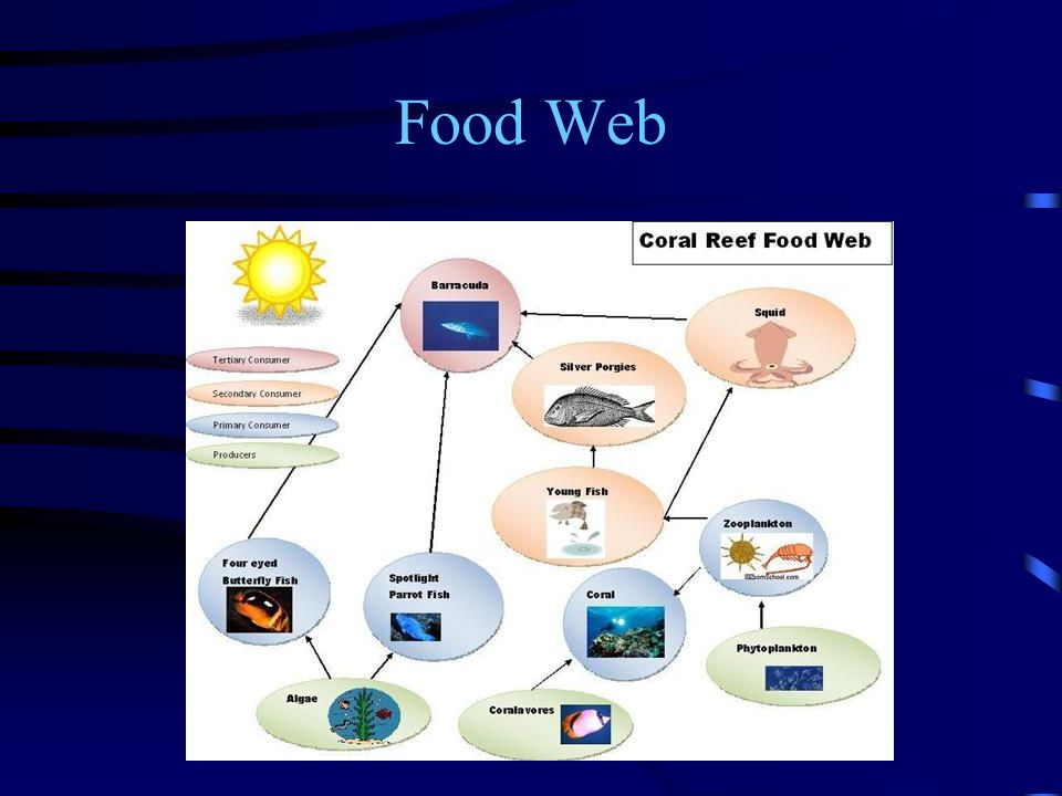 Coral Reefs By Helena Nikoguova Ppt Download