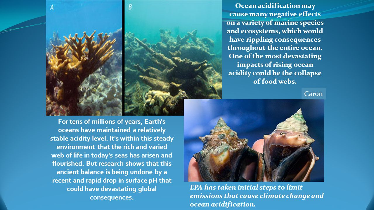 marine ecosystem changes rapidly
