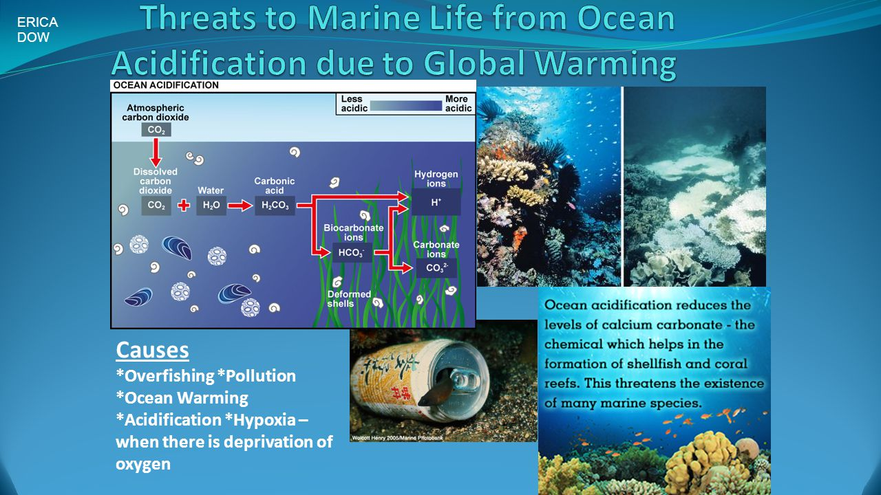 the effects of ocean acidification on various sea creatures Fish are generally relatively insensitive to ocean acidification nevertheless, in  more acidic water they do not swim without any effects after all.