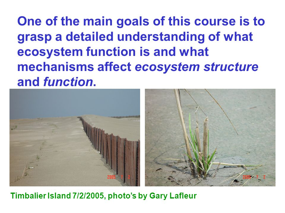 structure and function of grassland ecosystem pdf