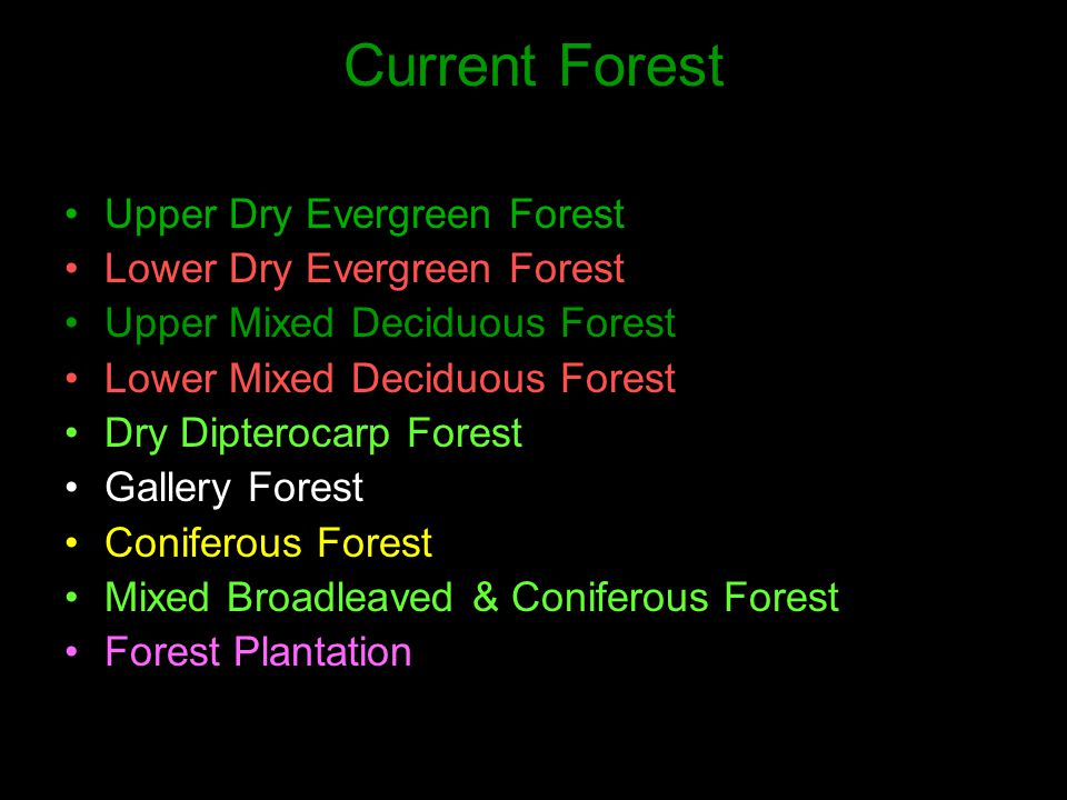 Current Forest Upper Dry Evergreen Forest Lower Dry Evergreen Forest