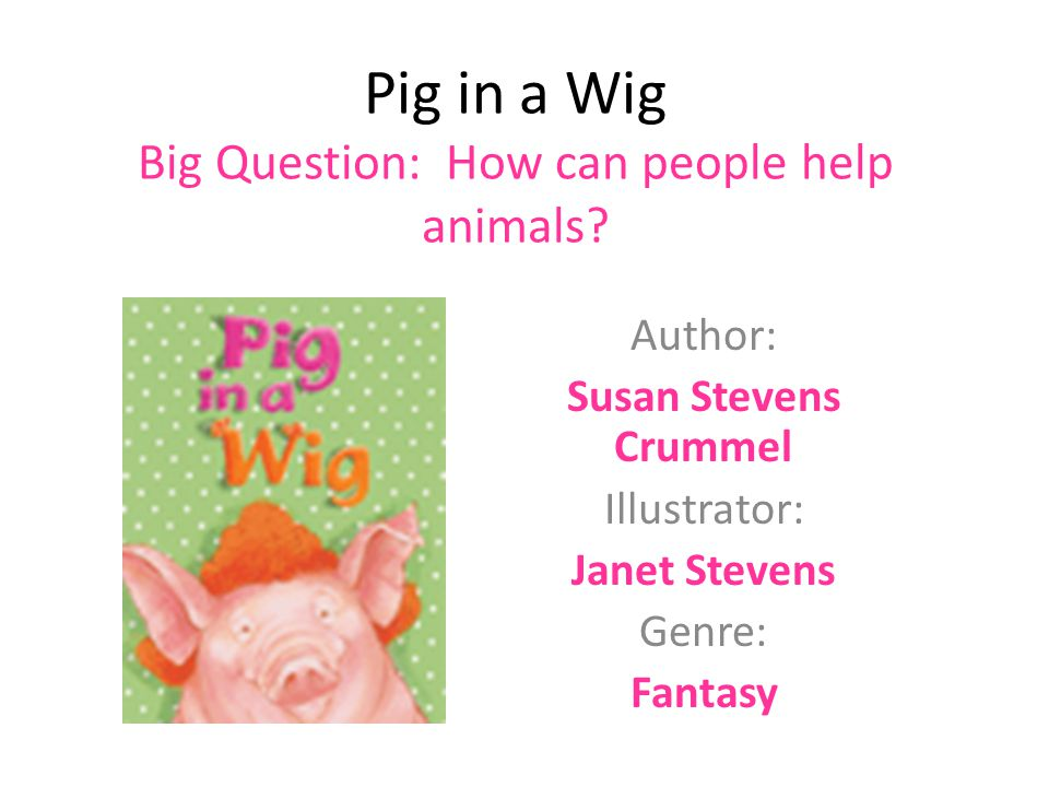 Pig in a Wig Big Question: How can people help animals
