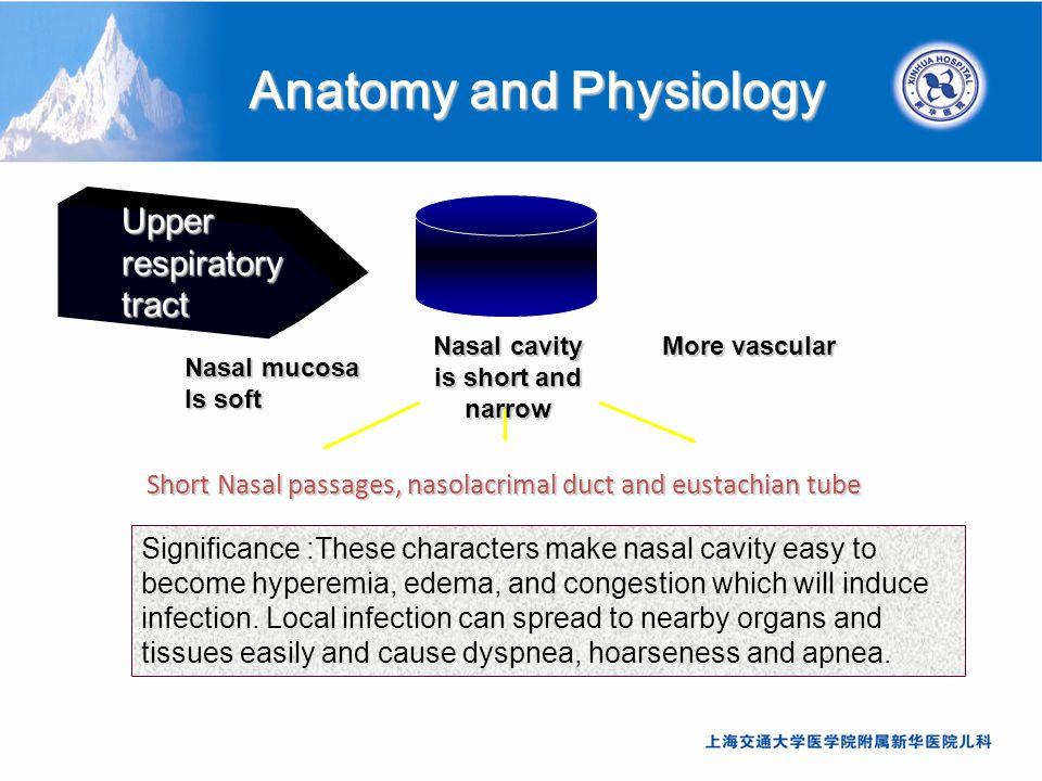 Lujoso Anatomy And Physiology Of Pneumonia Cresta - Anatomía de Las ...