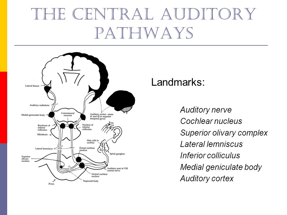 The central auditory pathways