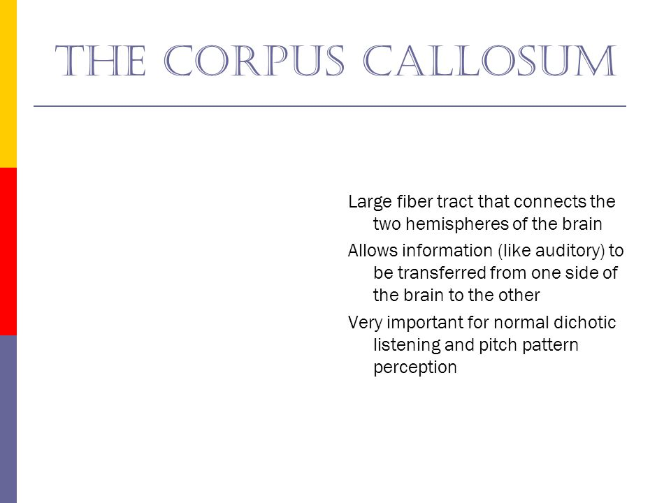 The corpus callosum Large fiber tract that connects the two hemispheres of the brain.