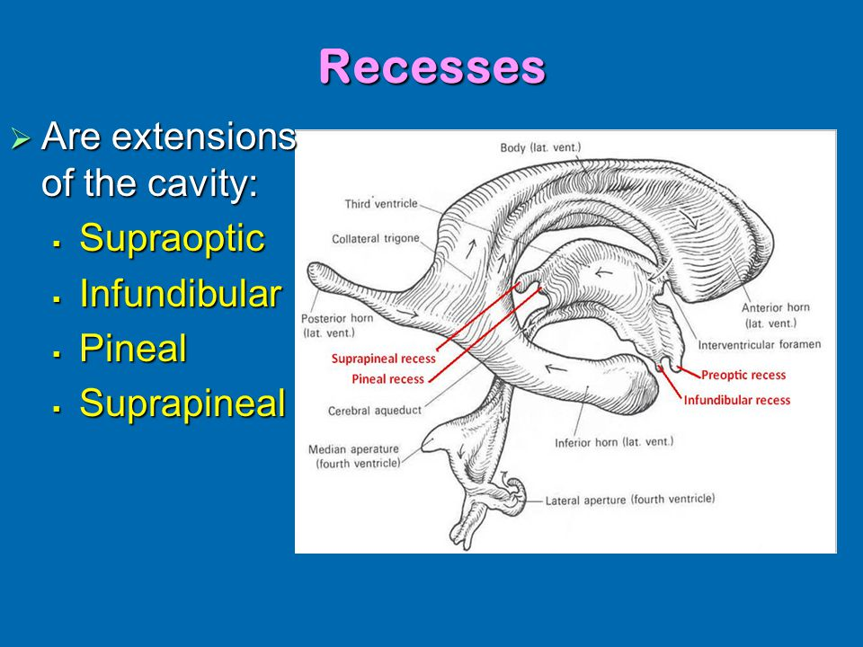 Lateral Recess Anatomy