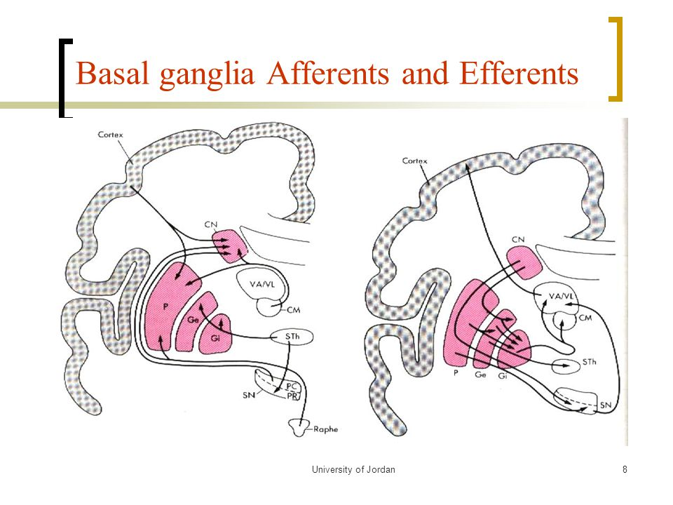 Basal ganglia Afferents and Efferents