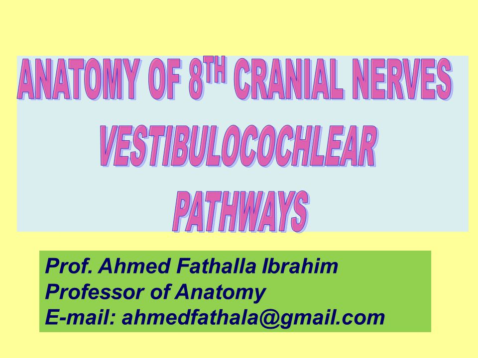 ANATOMY OF 8TH CRANIAL NERVES - ppt video online download
