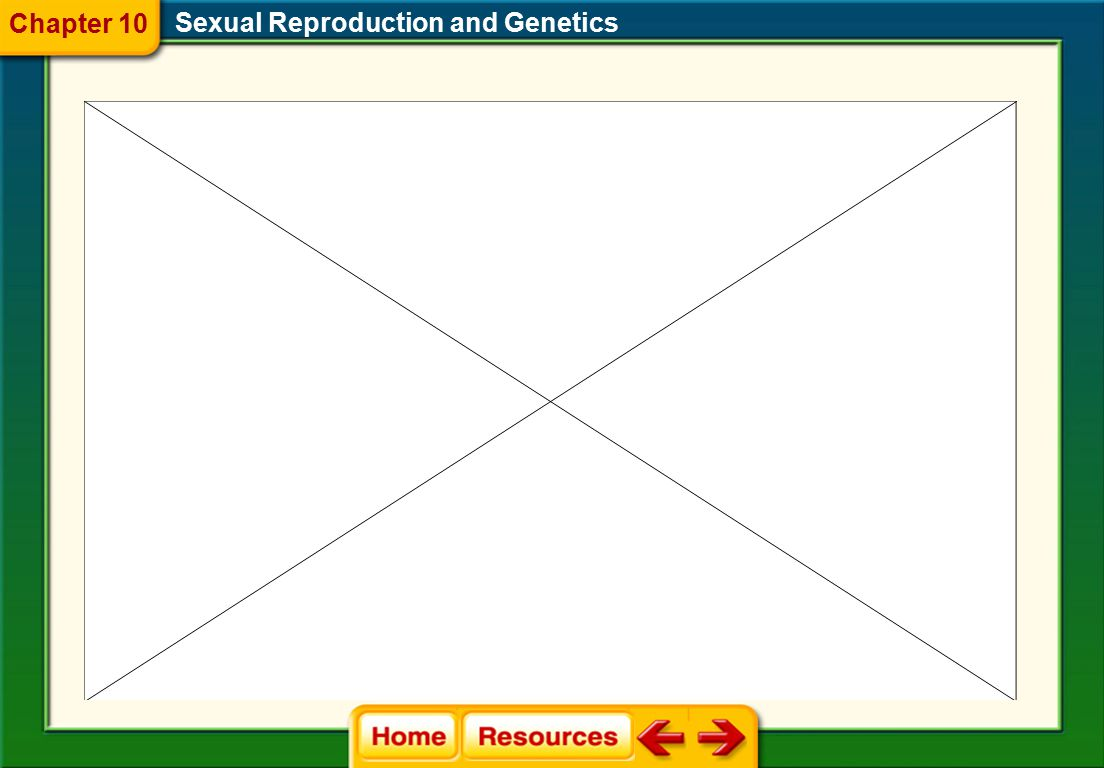 Chapter 10 Sexual Reproduction and Genetics