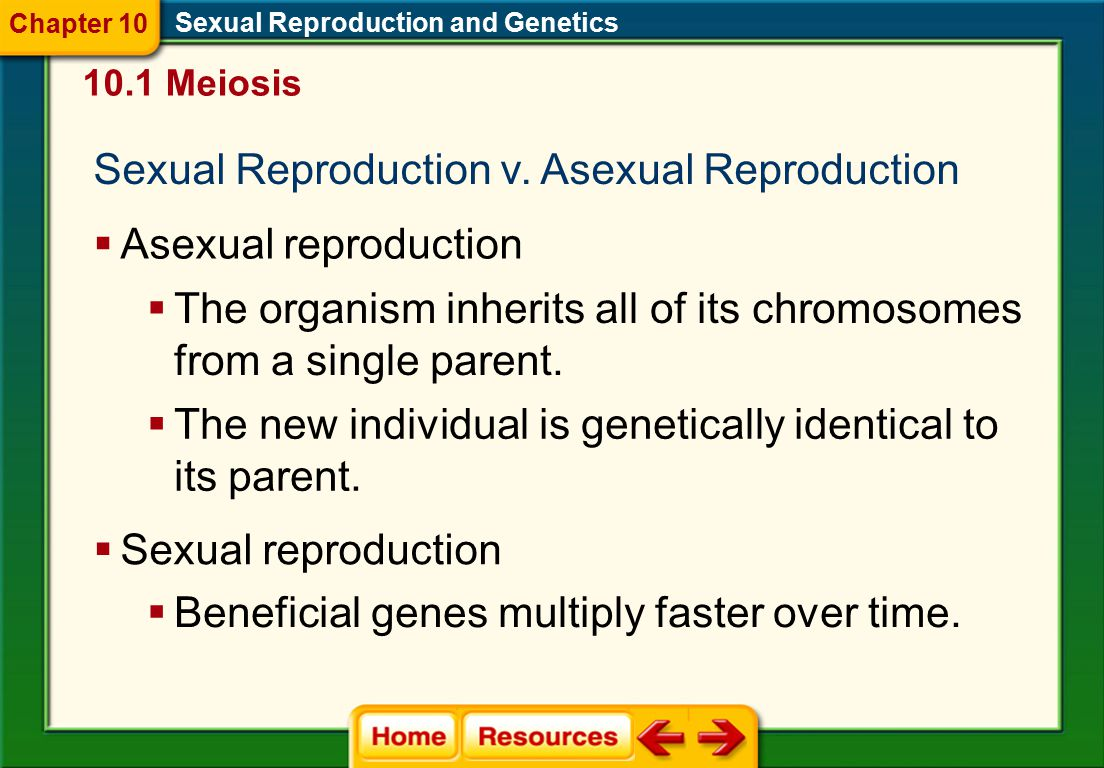 Sexual Reproduction v. Asexual Reproduction