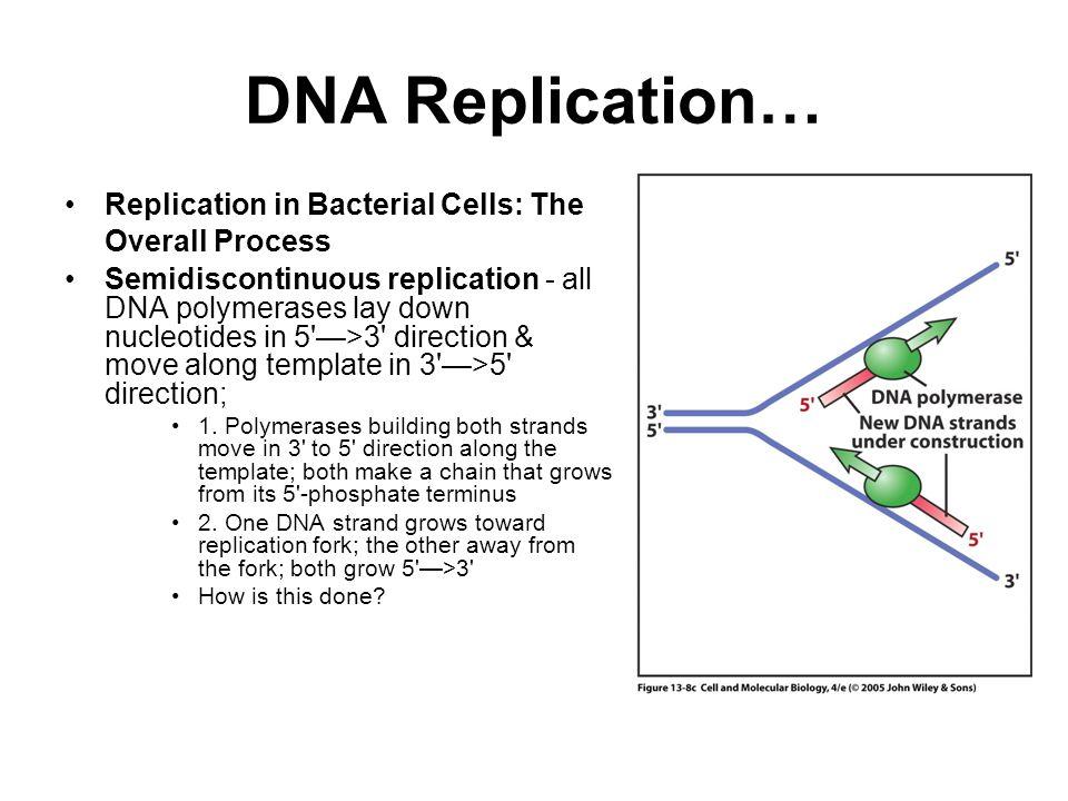 Dna Replication Template Dna Replication Gif Dna Replication C483