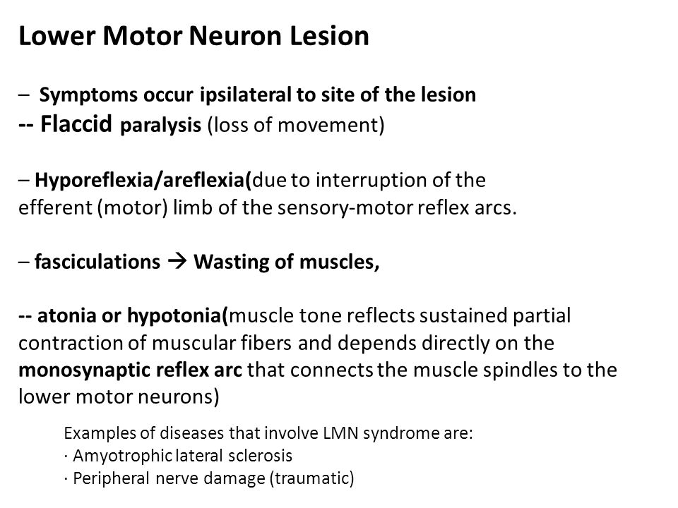 Organization of the motor system ppt video online download for Lower motor neuron diseases
