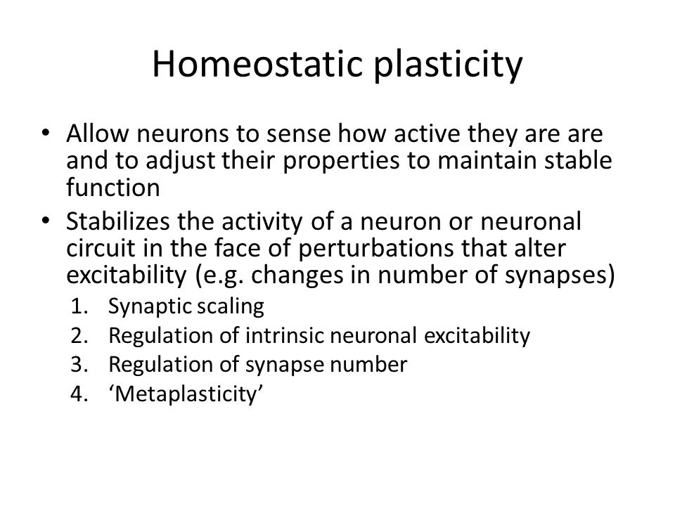 What is homeostatic plasticity?