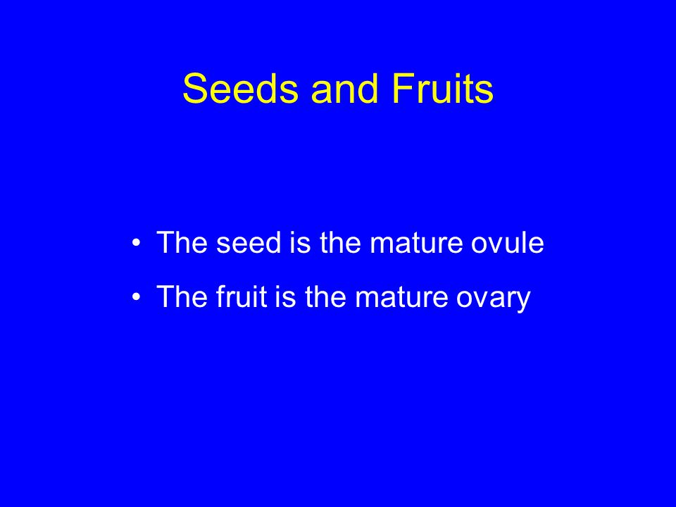 Seeds and Fruits The seed is the mature ovule