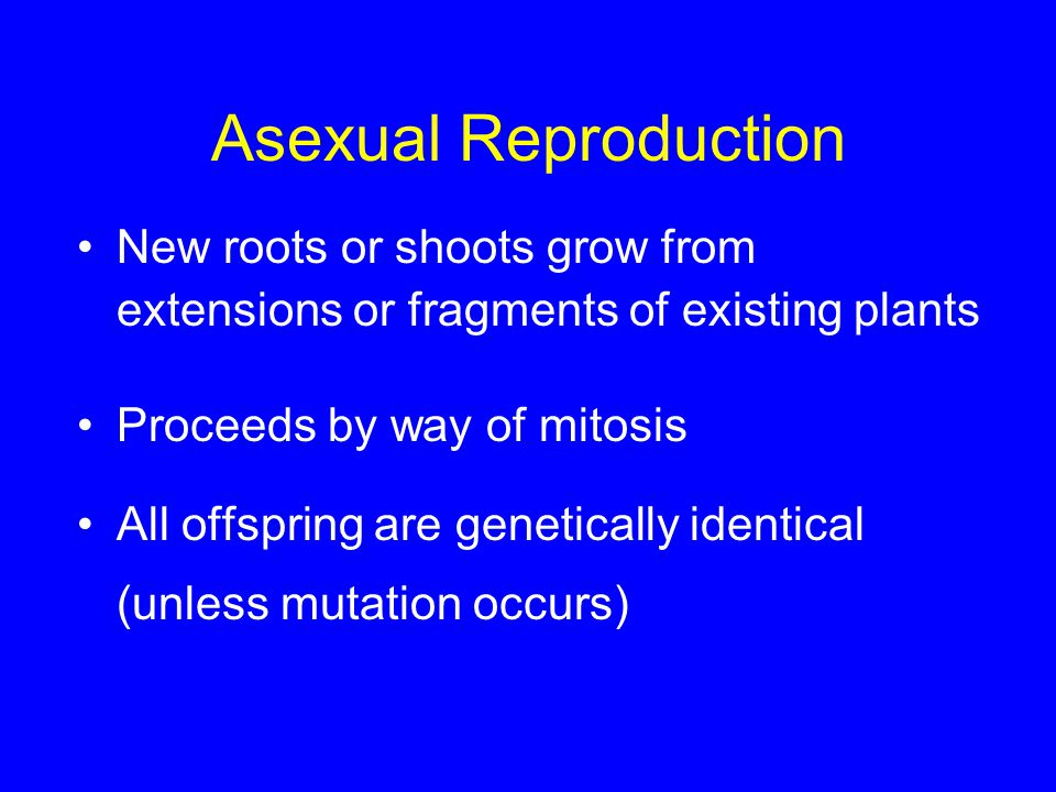 Asexual Reproduction New roots or shoots grow from extensions or fragments of existing plants. Proceeds by way of mitosis.