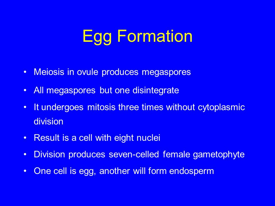 Egg Formation Meiosis in ovule produces megaspores
