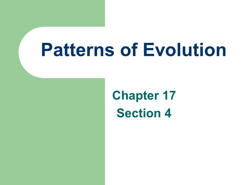 Power Notes 11.6 - SECTION PATTERNS IN EVOLUTION 11 6 Power Notes ...