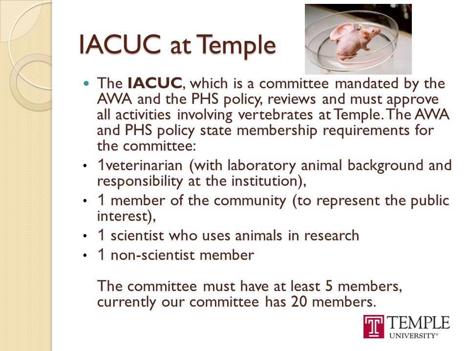 IACUC at Temple
