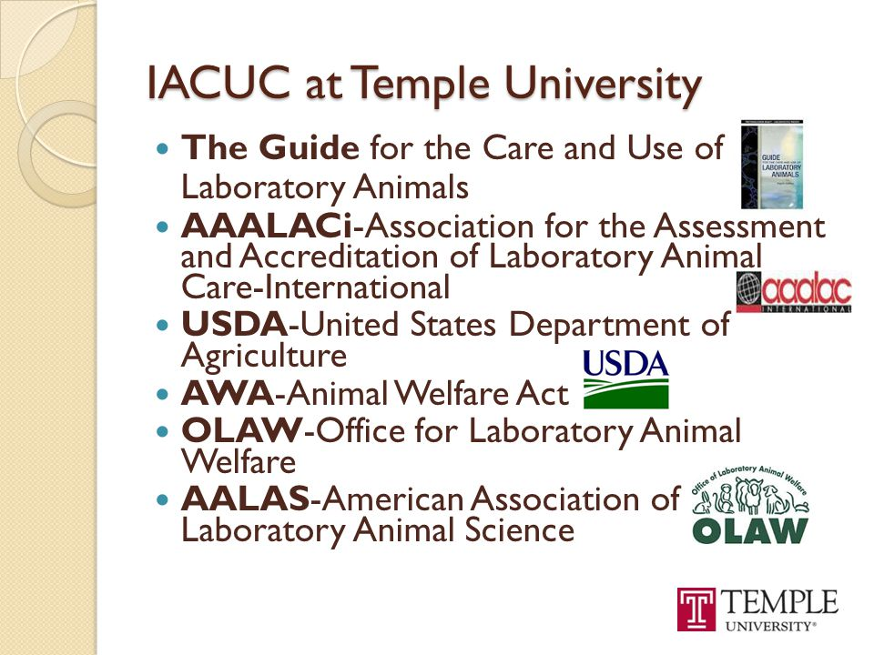 IACUC at Temple University