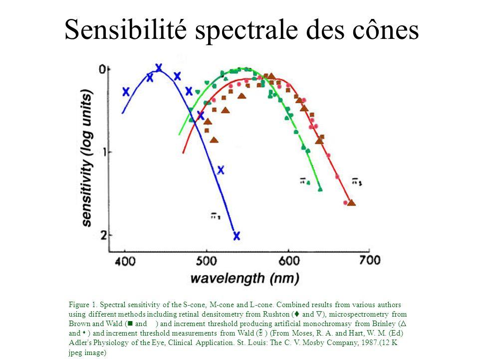 Sensibilité spectrale des cônes