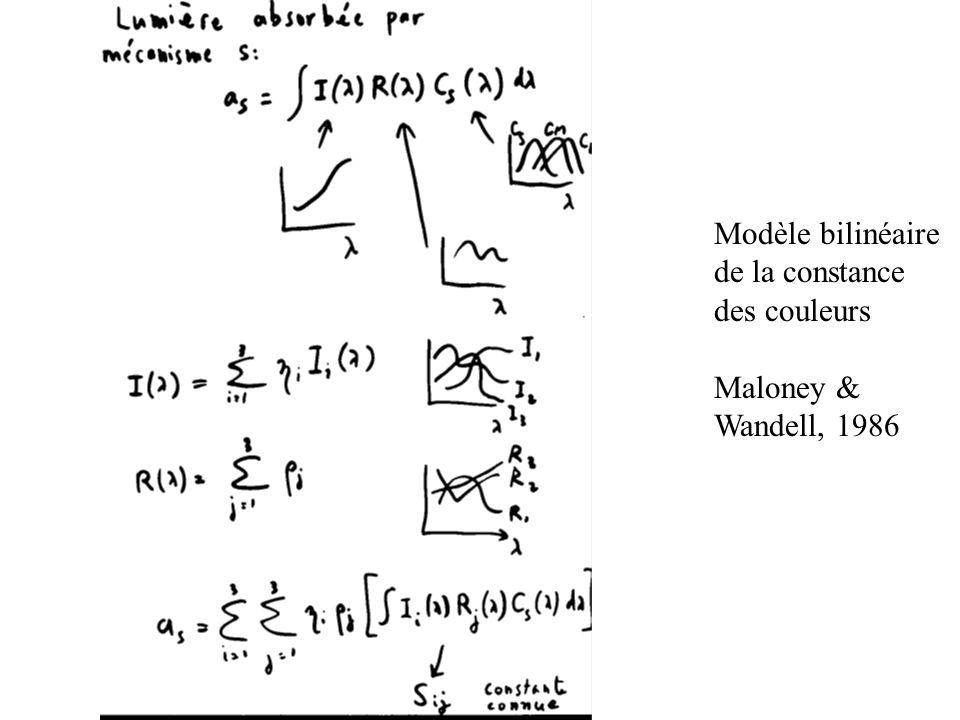 Modèle bilinéaire de la constance des couleurs Maloney & Wandell, 1986
