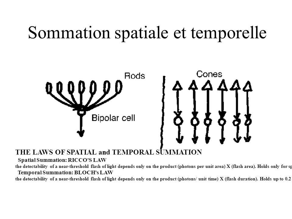 Sommation spatiale et temporelle