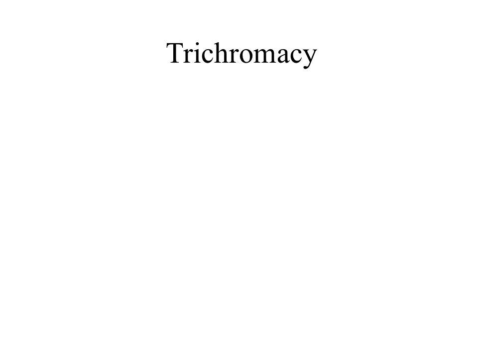 Trichromacy
