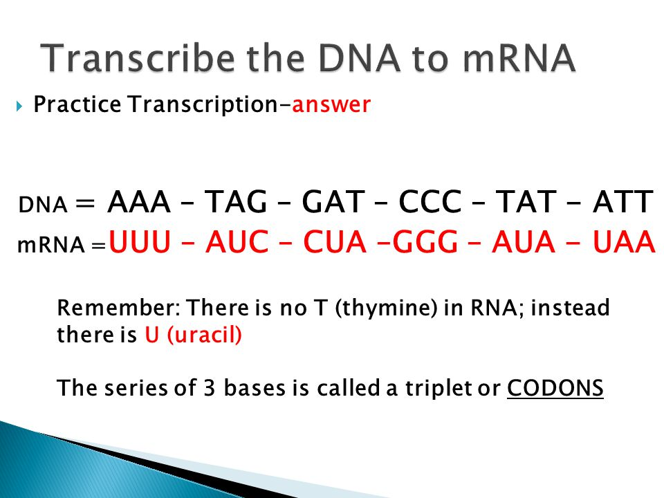 Protein Synthesis making proteins ppt download – Protein Synthesis Worksheet Answers
