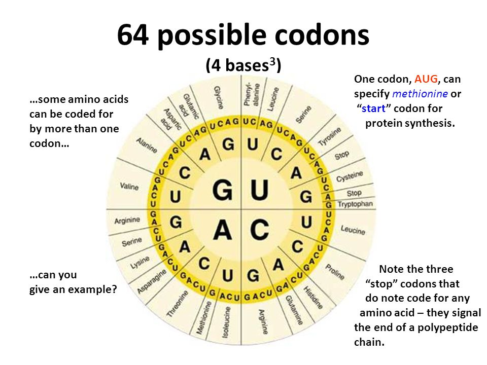 64 possible codons (4 bases3)