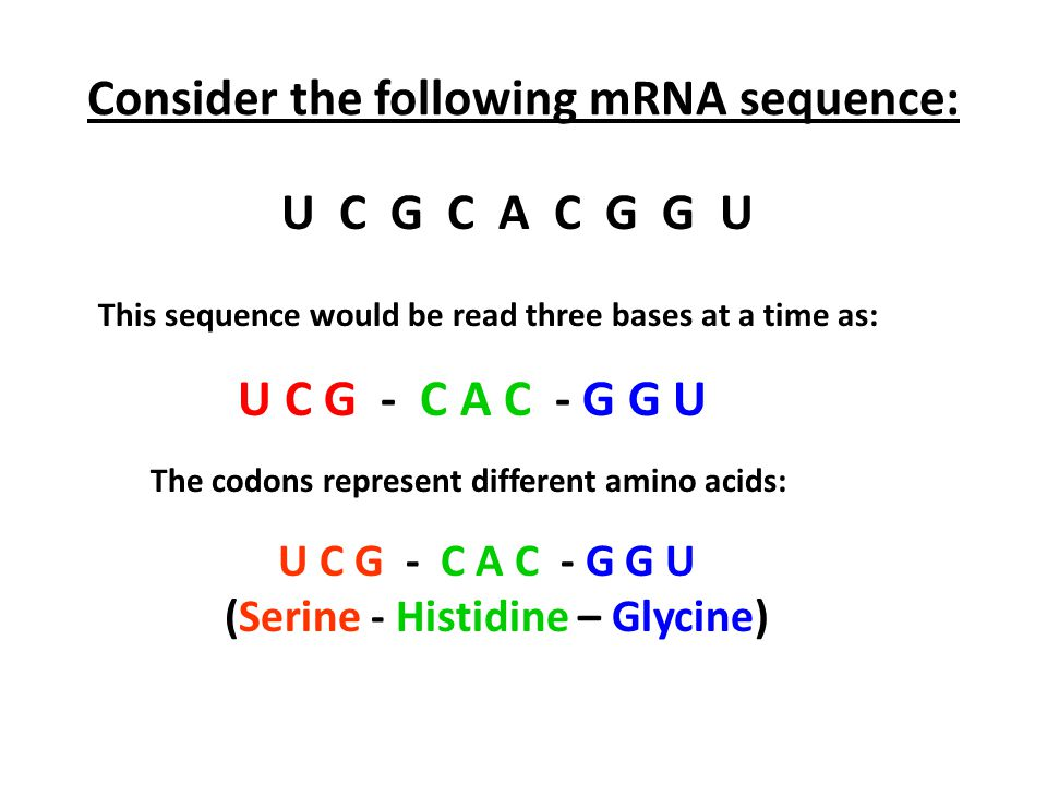 Consider the following mRNA sequence: