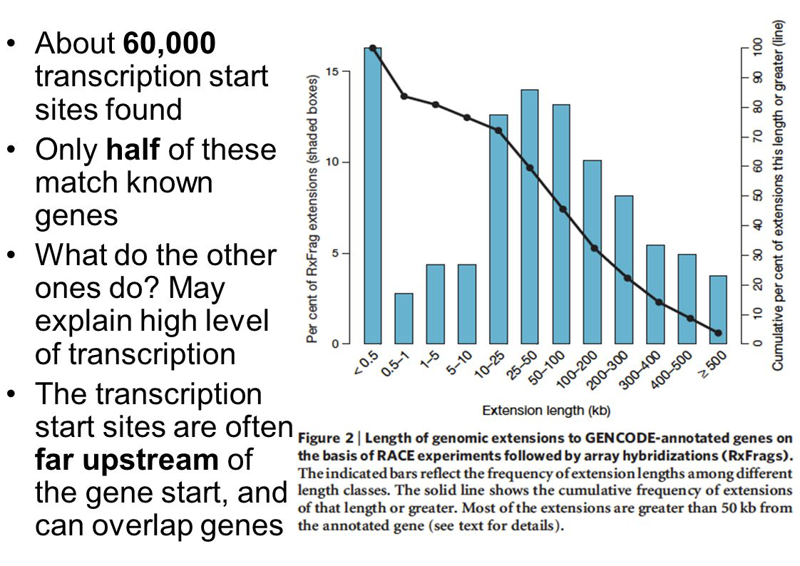About 60,000 transcription start sites found