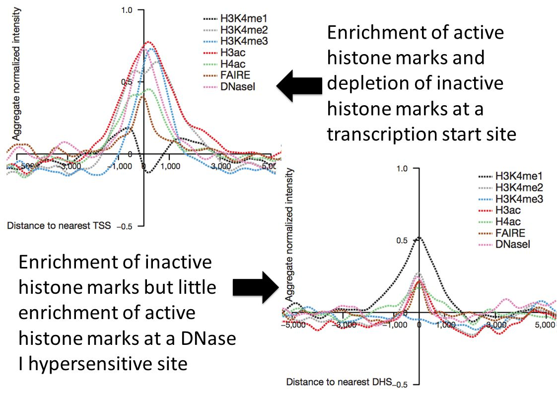 Enrichment of active histone marks and depletion of inactive histone marks at a transcription start site
