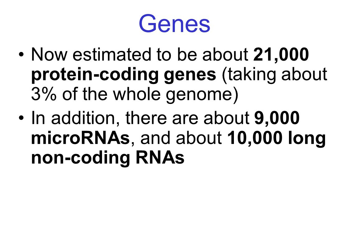 Genes Now estimated to be about 21,000 protein-coding genes (taking about 3% of the whole genome)